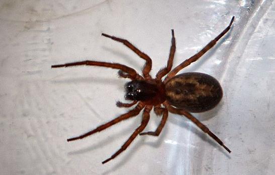 Përfundon në spital pasi e pickoi merimanga